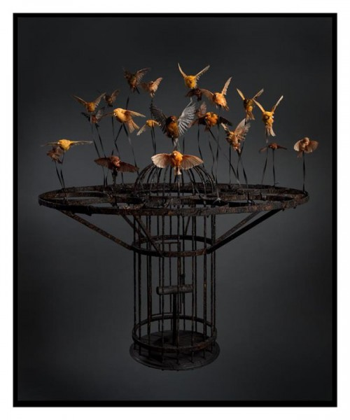 polly morgan birdcage